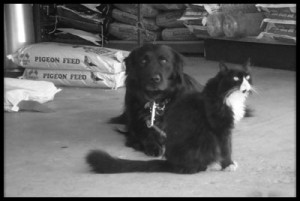 dogandcat2